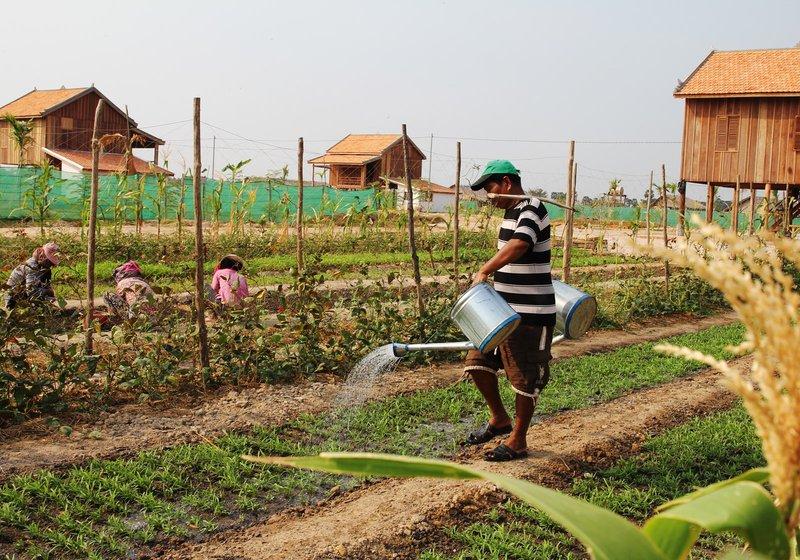 Органическое сельское хозяйство гарантирует стабильную прибыль. Фото: Smiling Gecko